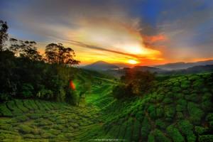 Cameroon_Highland