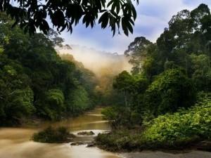 Sabah-river-safari-Malaysia