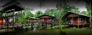 natural lodge_sabah