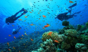tioman_diving